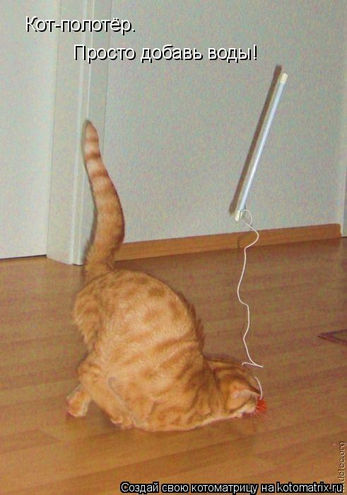 Котоматрица: Кот-полотёр.  Просто добавь воды!