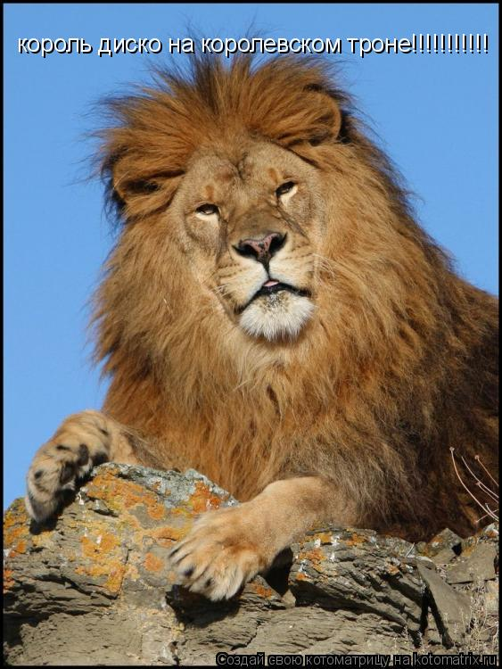 Котоматрица: король диско на королевском троне!!!!!!!!!!!
