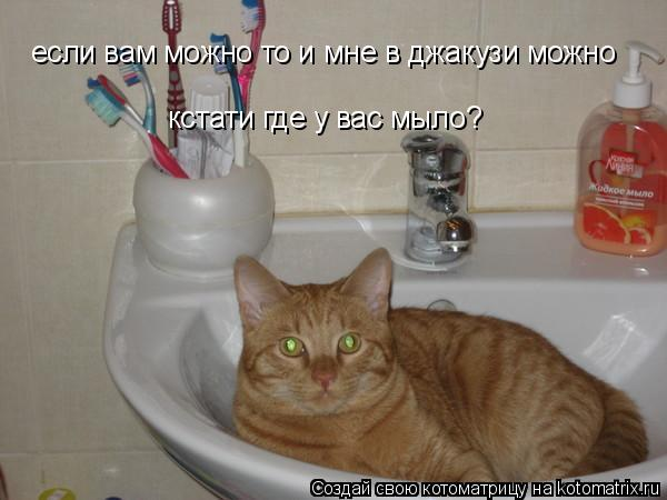 Котоматрица: кстати где у вас мыло? если вам можно то и мне в джакузи можно