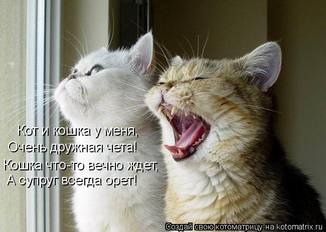 Котоматрица: Кот и кошка у меня, Очень дружная чета! А супруг всегда орет! Кошка что-то вечно ждет,
