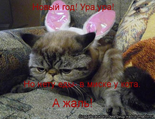 Котоматрица: Новый год! Ура,ура! Но нету еды- в миске у кота. А жаль!