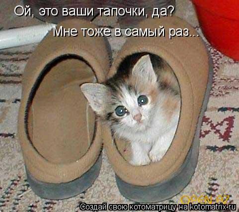 Котоматрица: Ой, это ваши тапочки, да? Мне тоже в самый раз...