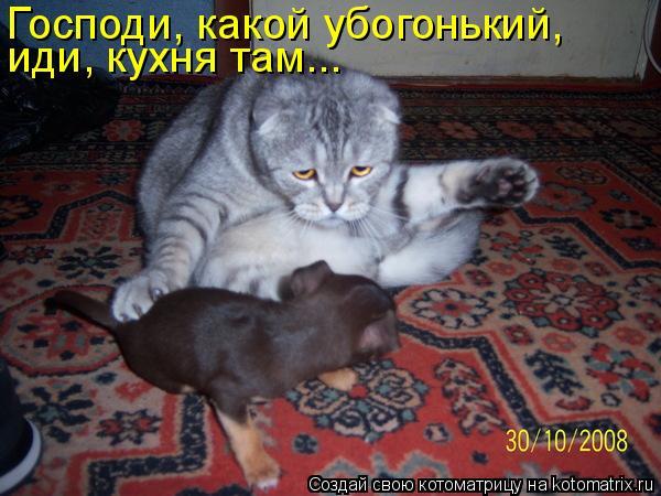 Котоматрица: Господи, какой убогонький, иди, кухня там...