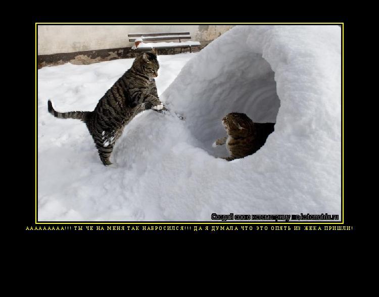 Самые лучшие картинки и фото кошек и