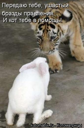 Котоматрица: И кот тебе в помощь! Передаю тебе, ушастый бразды правления... бразды правления...