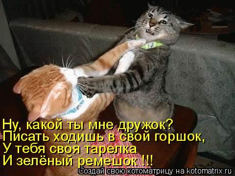 Котоматрица: У тебя своя тарелка Ну, какой ты мне дружок? И зелёный ремешок !!! Писать ходишь в свой горшок,