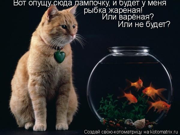 Котоматрица: Вот опущу сюда лампочку, и будет у меня   рыбка жареная! Или варёная? Или не будет?