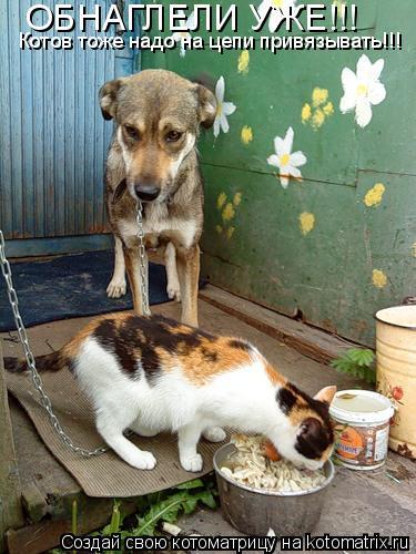 Котоматрица: Котов тоже надо на цепи привязывать!!! ОБНАГЛЕЛИ УЖЕ!!!