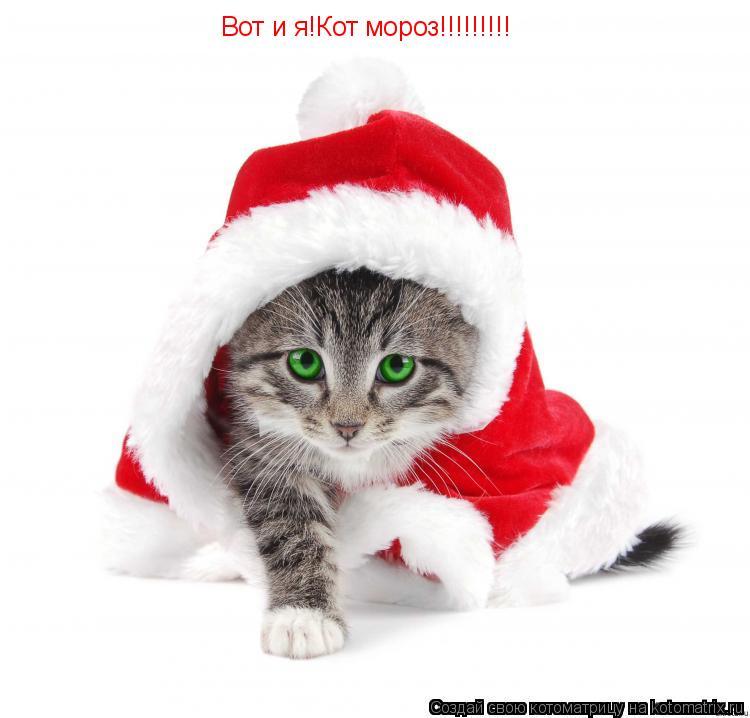 Котоматрица: Вот и я!Кот мороз!!!!!!!!!