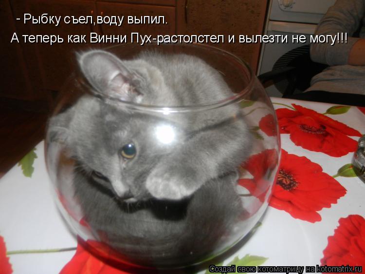 Котоматрица: Рыбку съел,воду выпил. А теперь как Винни Пух-растолстел и вылезти не могу!!! -