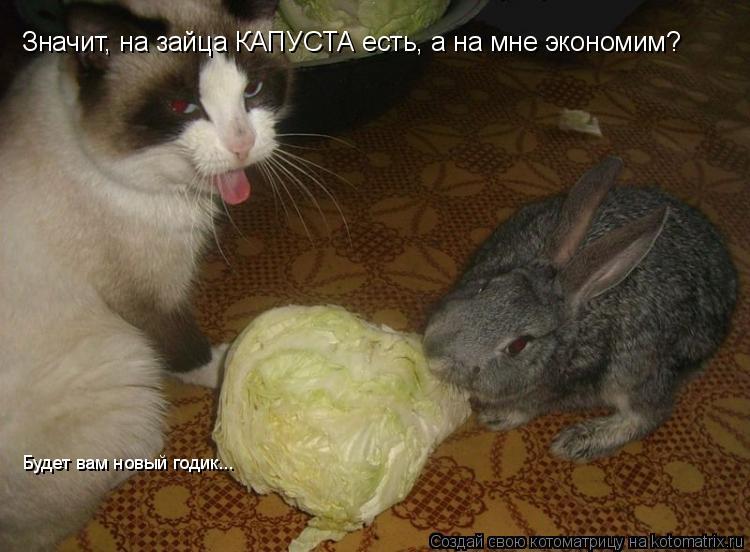 Котоматрица: Значит, на зайца КАПУСТА есть, а на мне экономим? Будет вам новый годик...