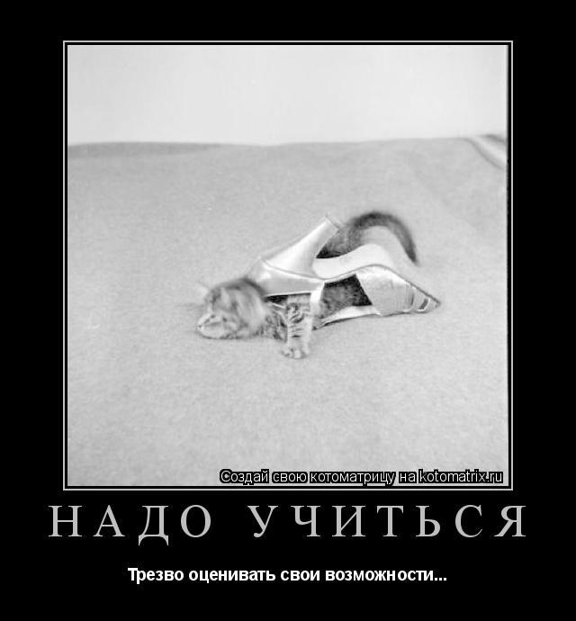 Котоматрица: Надо учиться Трезво оценивать свои возможности...