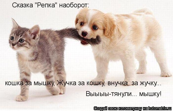 """Котоматрица: Сказка """"Репка"""" наоборот: кошка за мышку, Жучка за кошку, внучка  за жучку... Выыыы-тянули... мышку!"""