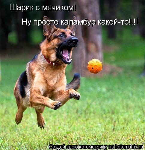 Котоматрица: Шарик с мячиком! Ну просто каламбур какой-то!!!!