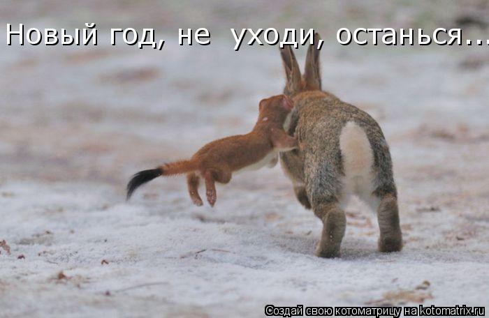 Котоматрица: Новый год, не  уходи, останься.....