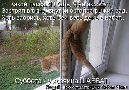 Котоматрица: Какой пассаж! Жаль, я не акробат, Застрял в окне, внутри остался рыжий зад. Хоть заорись, хоть бей весь день в набат... Суббота - у хозяина ШАББА