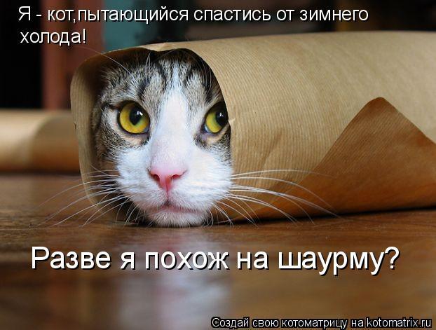 Котоматрица: Я - кот,пытающийся спастись от зимнего холода! Разве я похож на шаурму?