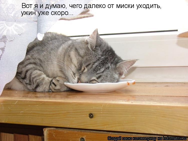 Котоматрица: Вот я и думаю, чего далеко от миски уходить, ужин уже скоро...