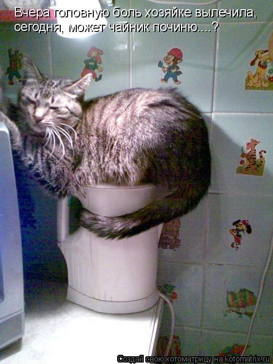 Котоматрица: Вчера головную боль хозяйке вылечила, сегодня, может чайник починю....?