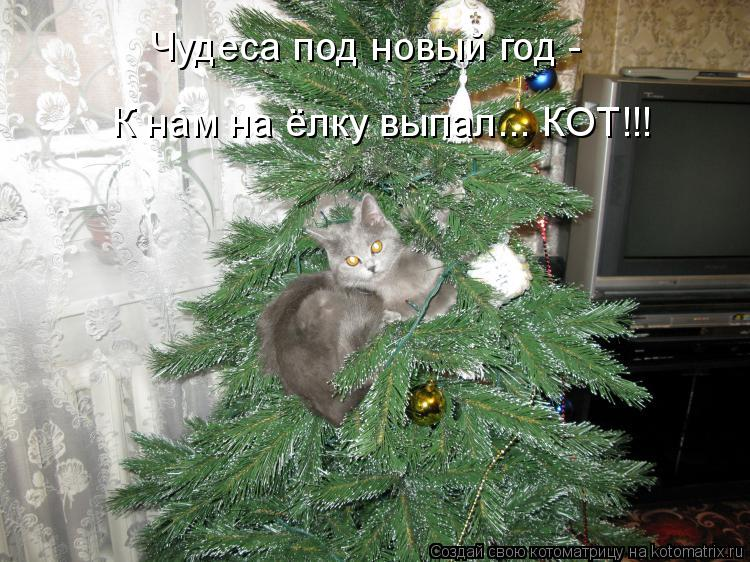 Чудеса под новый год -  К нам на ёлку выпал... КОТ!!!