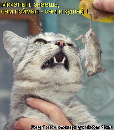 Котоматрица: Михалыч, знаешь,  сам поймал - сам и кушай !