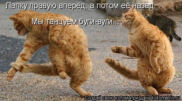 Котоматрица: Лапку правую вперёд, а потом её назад... Мы танцуем буги-вуги...