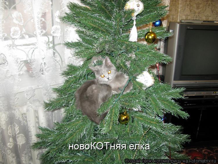 Котоматрица: новоКОТняя елка