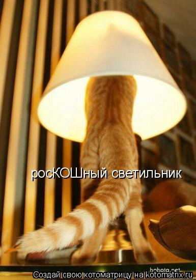 Котоматрица: росКОШный светильник