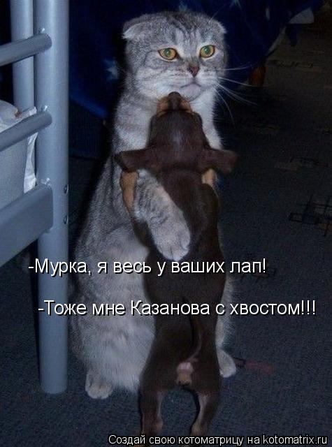 Котоматрица: -Мурка, я весь у ваших лап! -Тоже мне Казанова с хвостом!!!