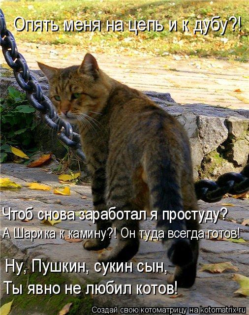 Котоматрица: Ты явно не любил котов! Ну, Пушкин, сукин сын, А Шарика к камину?! Он туда всегда готов! Чтоб снова заработал я простуду? Опять меня на цепь и к