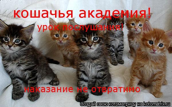 Котоматрица: кошачья академия! урок послушания! урок послушания! наказание не отвратимо