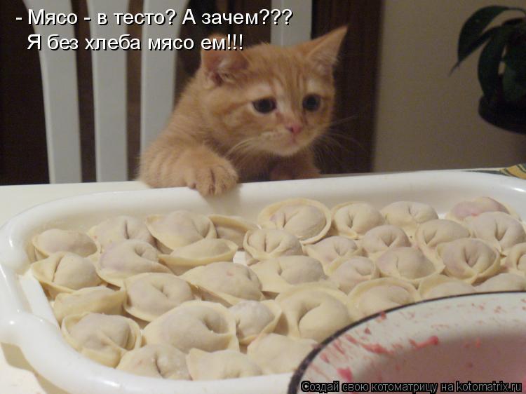 Котоматрица: - Мясо - в тесто? А зачем??? Я без хлеба мясо ем!!!