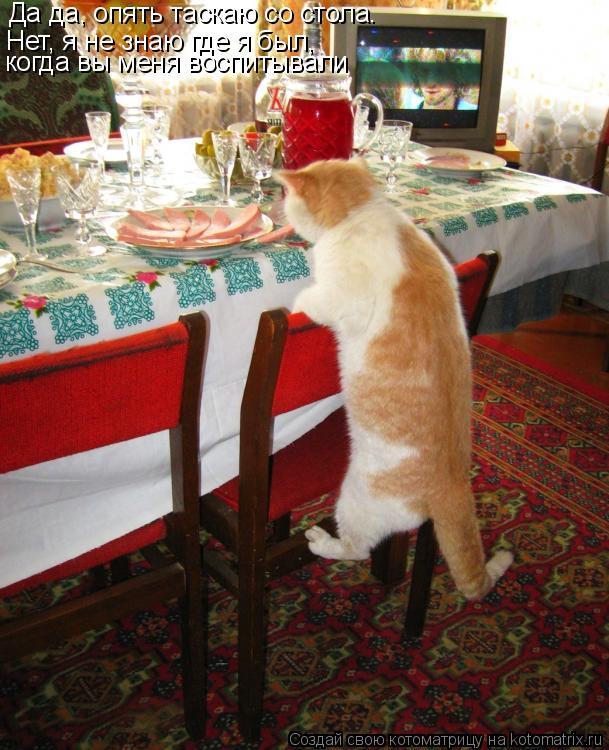 Котоматрица: Да да, опять таскаю со стола. Нет, я не знаю где я был,  когда вы меня воспитывали