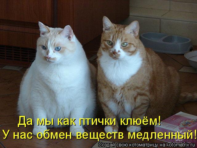 Котоматрица: Да мы как птички клюём! У нас обмен веществ медленный!