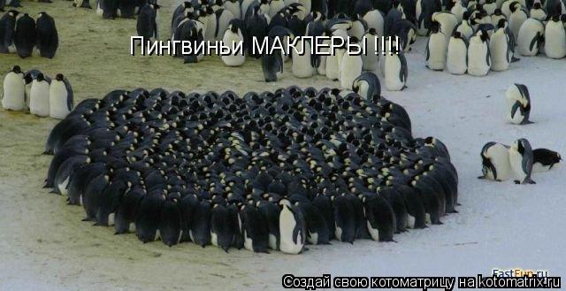 Котоматрица: Пингвиньи МАКЛЕРЫ !!!!