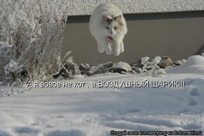 Котоматрица: А я вовсе не кот , а ВОЗДУШНЫЙ ШАРИК!!!