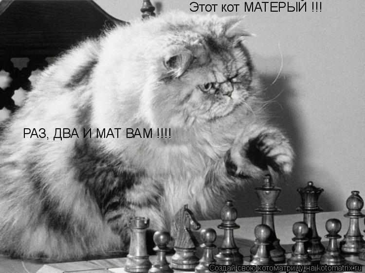 Котоматрица: Этот кот МАТЕРЫЙ !!! РАЗ, ДВА И МАТ ВАМ !!!!