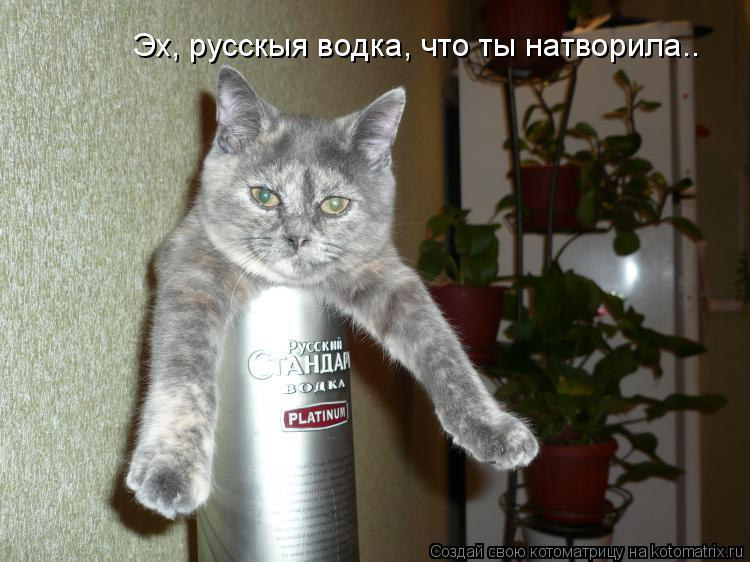 Котоматрица: Эх, русскыя водка, что ты натворила..