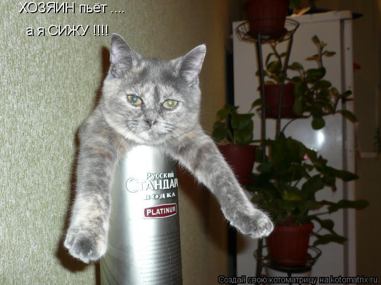 Котоматрица: ХОЗЯИН пьёт .... а я СИЖУ !!!!