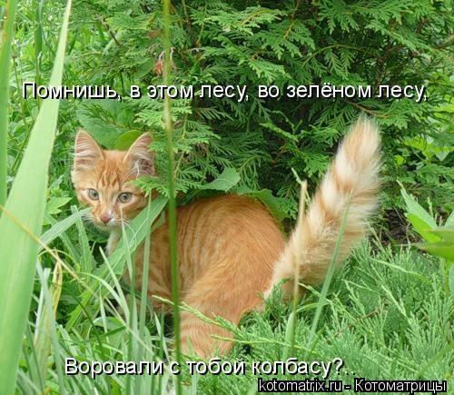 Котоматрица: Помнишь, в этом лесу, во зелёном лесу, Воровали с тобой колбасу?..