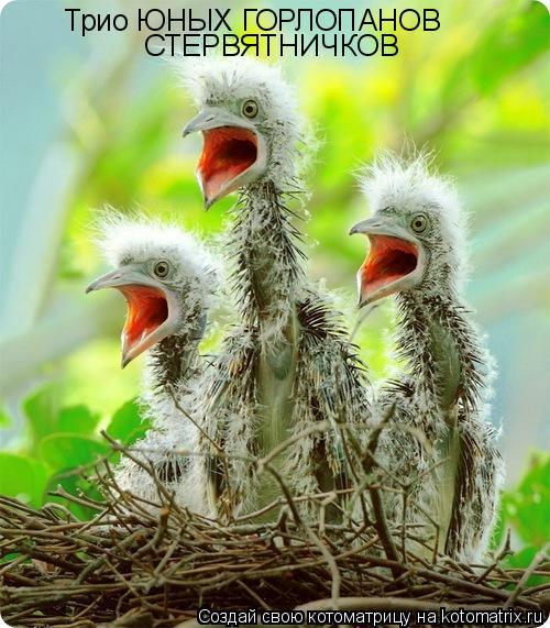 Котоматрица: Трио ЮНЫХ ГОРЛОПАНОВ  СТЕРВЯТНИЧКОВ