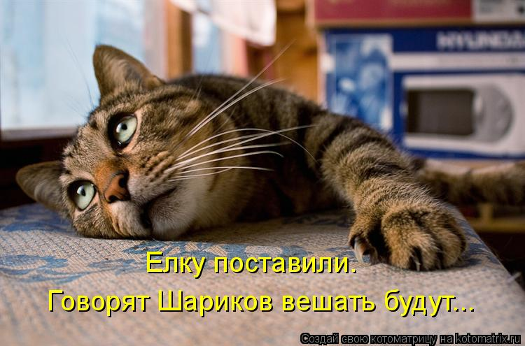 Котоматрица: Елку поставили. Говорят Шариков вешать будут...