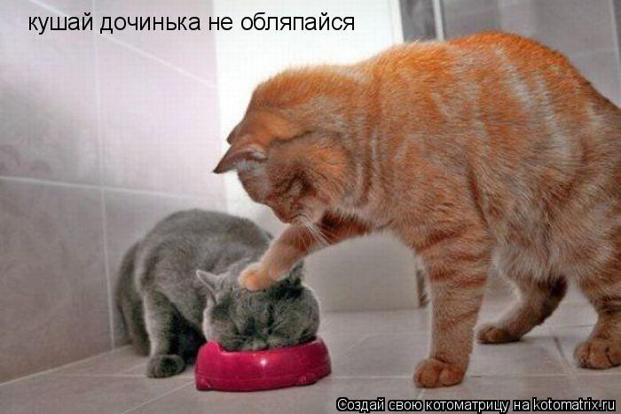 Котоматрица: кушай дочинька не обляпайся