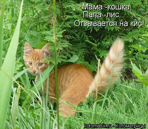 Котоматрица: Мама -кошка, Папа -лис, Отзывается на кис!