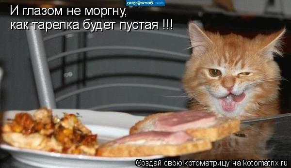 Котоматрица: И глазом не моргну, как тарелка будет пустая !!!