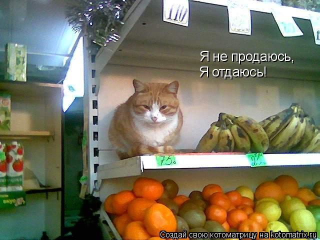 Котоматрица: Я не продаюсь, Я отдаюсь!