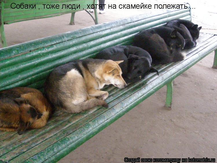 Котоматрица: Собаки , тоже люди , хотят на скамейке полежать....