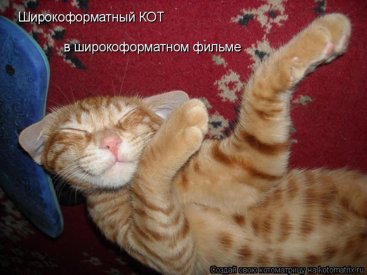 Котоматрица: Широкоформатный КОТ в широкоформатном фильме