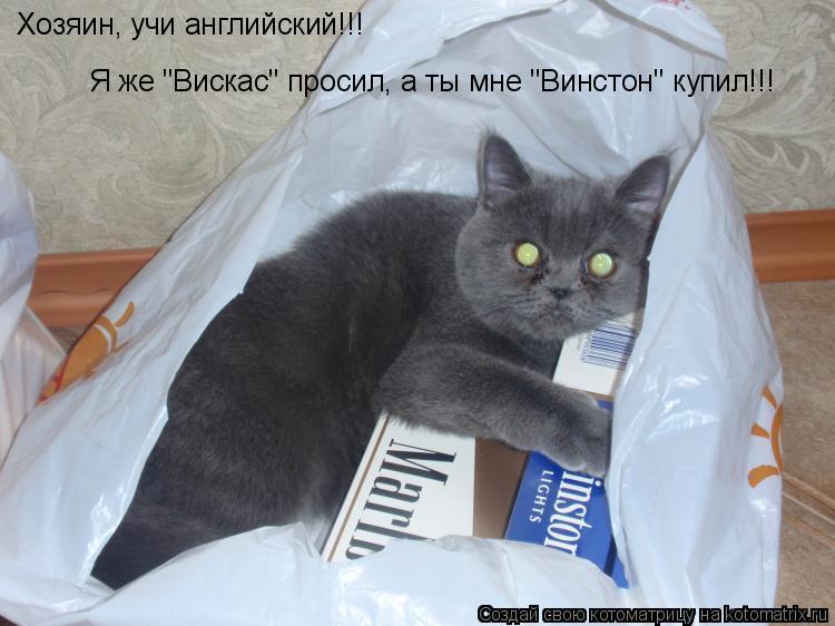 "Котоматрица: Хозяин, учи английский!!!  Я же ""Вискас"" просил, а ты мне ""Винстон"" купил!!!"