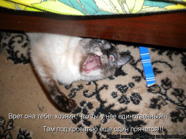 Котоматрица: Врет она тебе, хозяин, что ты у нее единственный!!! Там под кроватью еще один прячется!!!